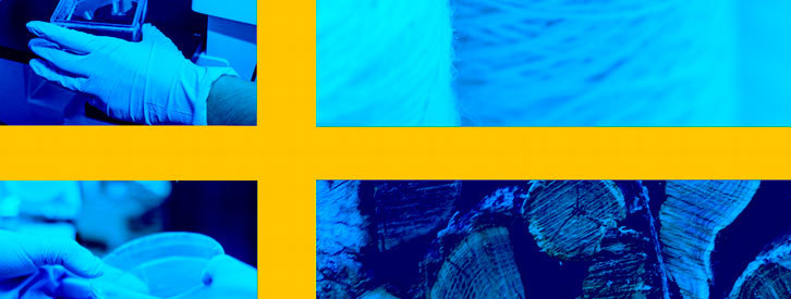 Madera transparente y celulosa artificial: dos inventos suecos que prometen revolucionar la industria