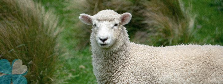 ternua-group-lana-aislante
