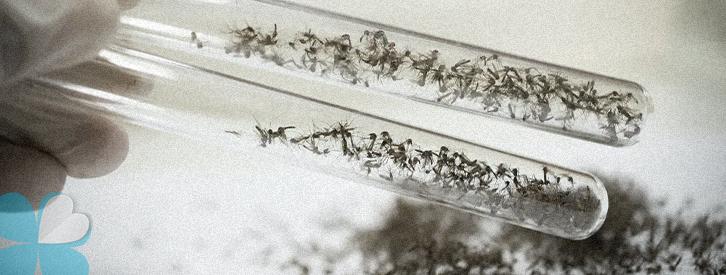google-mosquitos